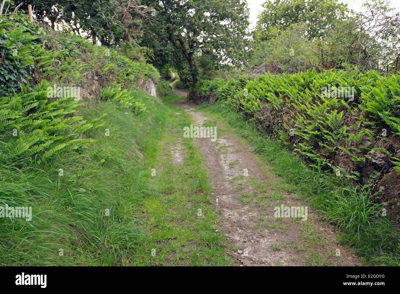 France Manche Fermanville path mills - Stock Image