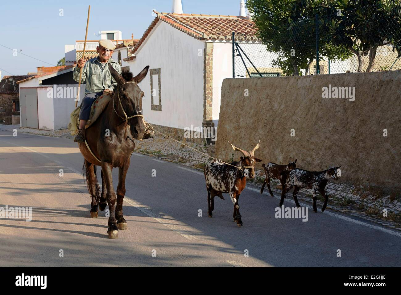 Portugal Algarve Furnazinhas Breeder on horseback and its goats in main village street Stock Photo