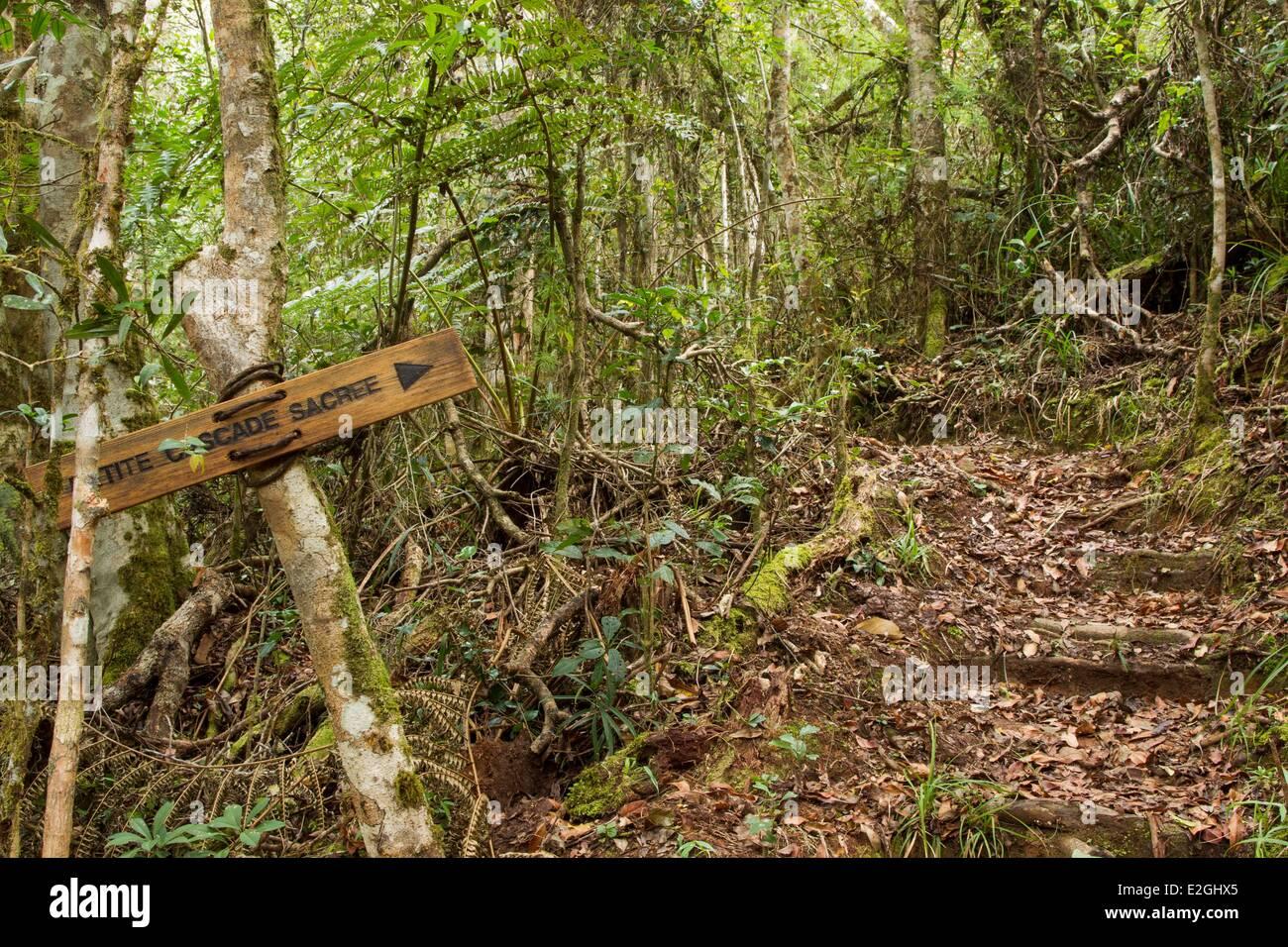 Madagascar Highlands Anjozorobe Angavo protected area Ecotrail in Anjozorobe rainforest - Stock Image