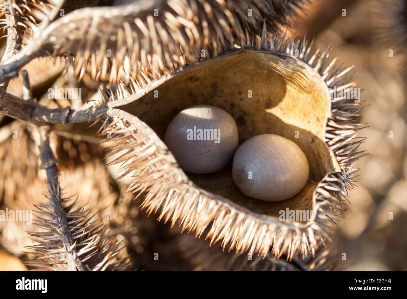 Madagascar Loky-Manambato protected area Daraina Sahaka lake seeds - Stock Image