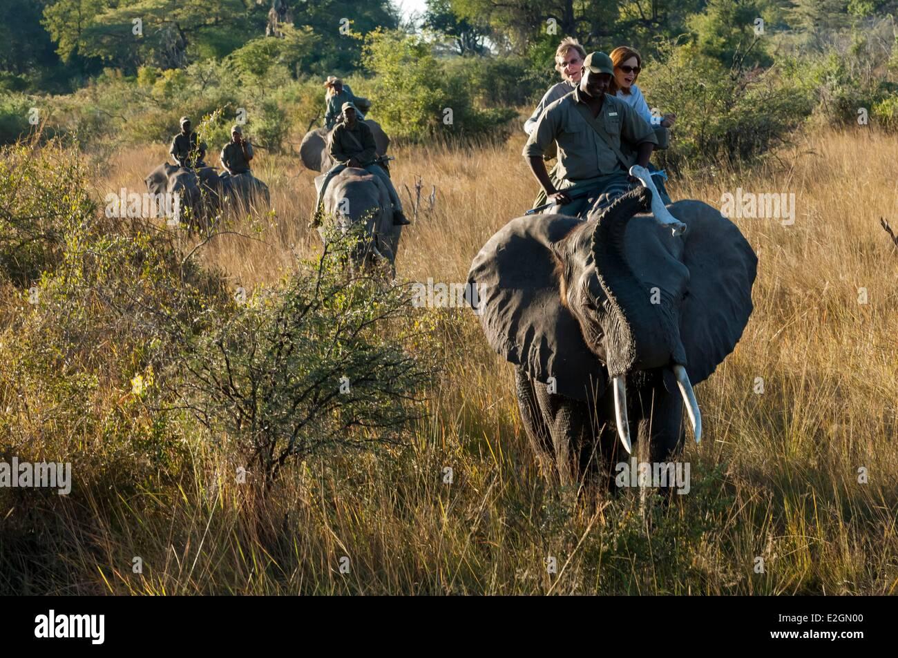 Botswana North West District Okavango Delta Abu Lodge safari on elephant back - Stock Image