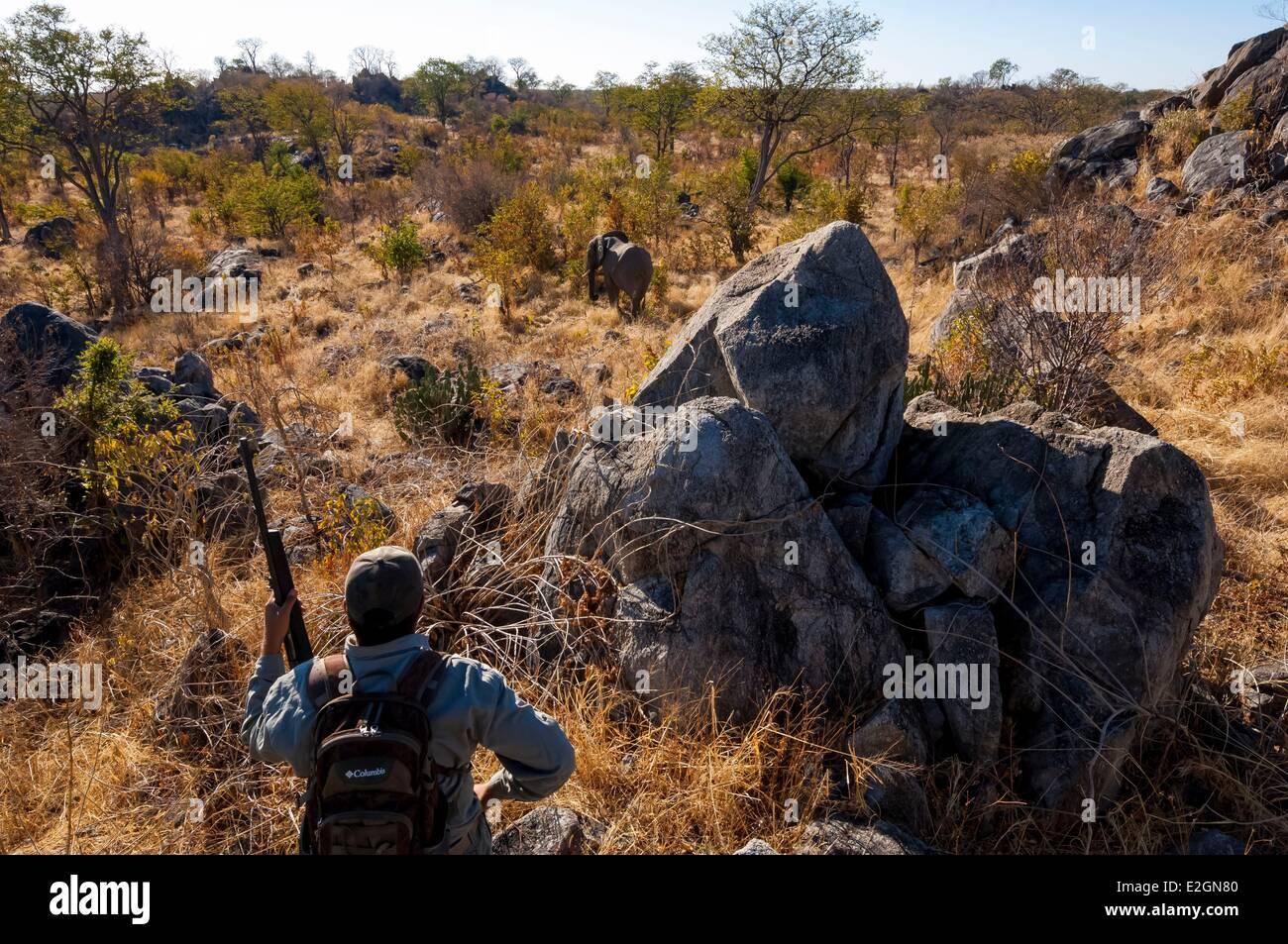 Zimbabwe Matabeleland North Province Hwange National Park Shuba Plains Camp Hwange walking safari with armed guide Stock Photo