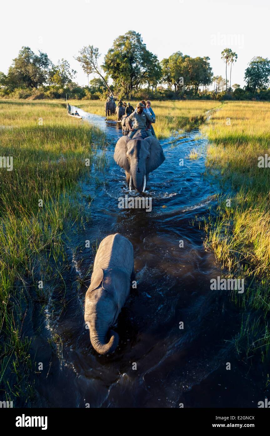 Botswana North West District Okavango Delta Abu Lodge safari on elephant back and by canoe Stock Photo