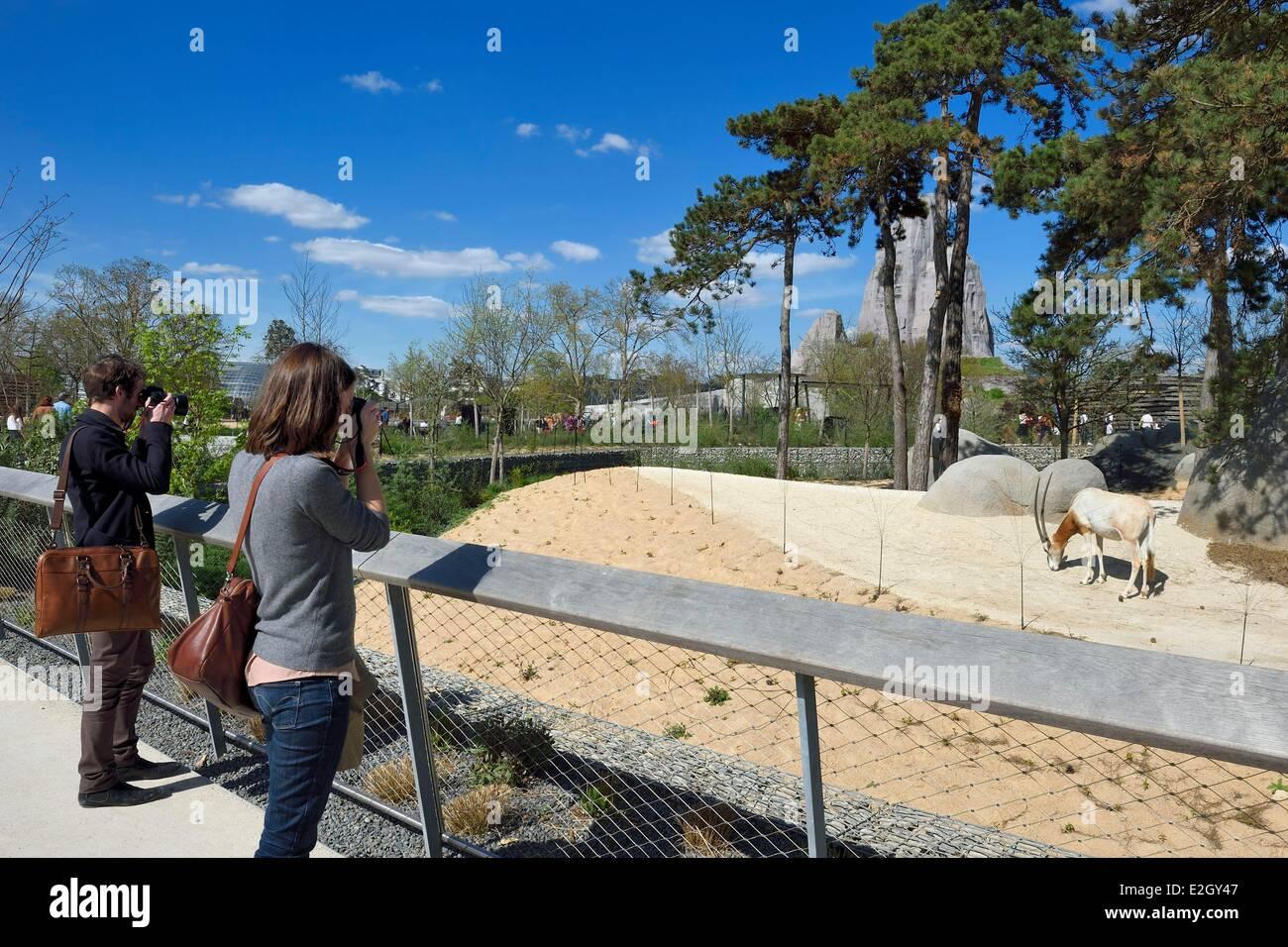 France Paris Paris Zoological Park (Zoo de Vincennes) Scimitar-horned oryx (Oryx dammah) in Sahel-Sudan biozone - Stock Image