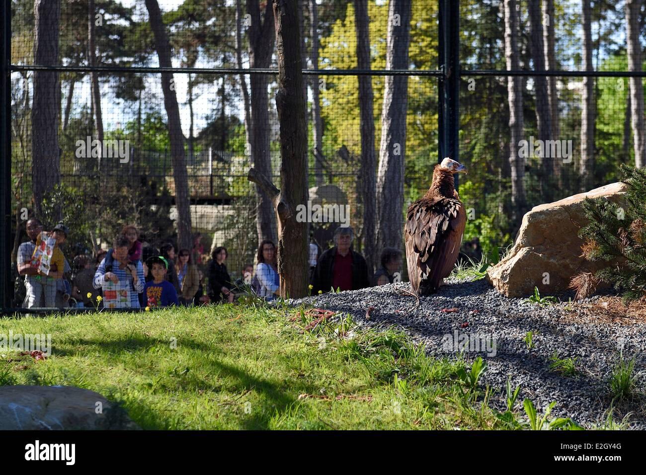 France Paris Paris Zoological Park (Zoo de Vincennes) griffon vulture (Gyps fulvus) in European biozone - Stock Image