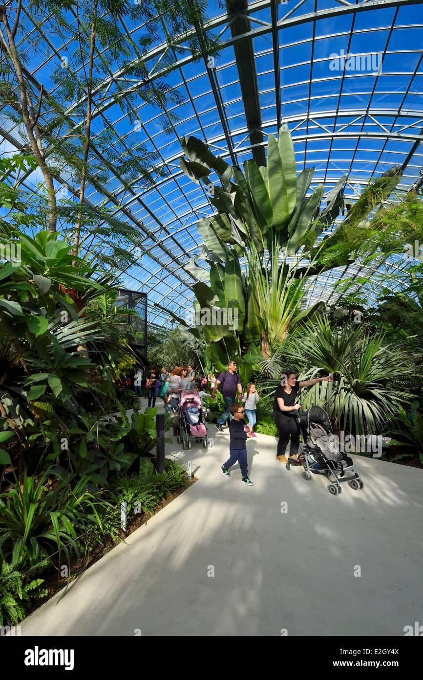 France Paris Paris Zoological Park (Zoo de Vincennes) restitution of tropical vegetation in Grande Serre (greenhouse) - Stock Image