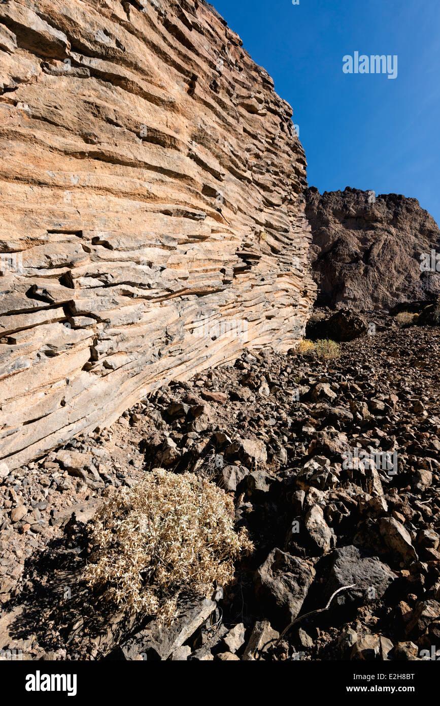 Brittlebush and columnar basalt, Grand Canyon, Arizona. - Stock Image