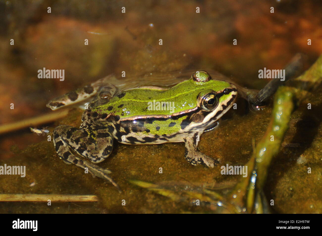 Baby Frogs Stock Photos & Baby Frogs Stock Images - Page 3 - Alamy