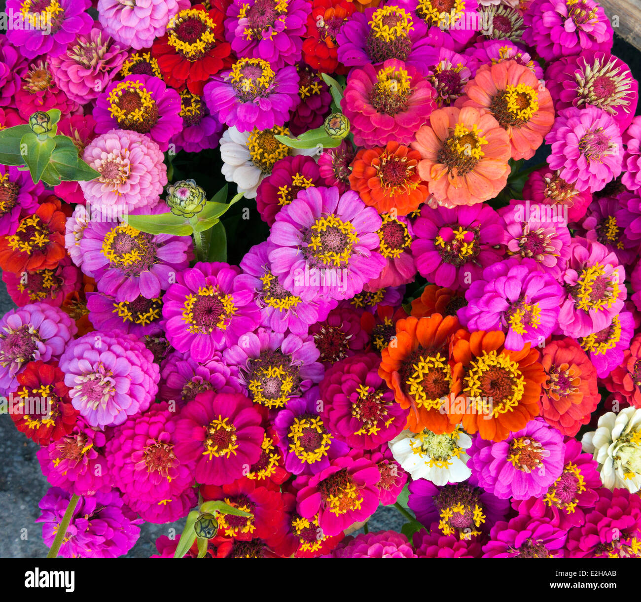 Many Flowers Bouquets Stock Photos Many Flowers Bouquets Stock