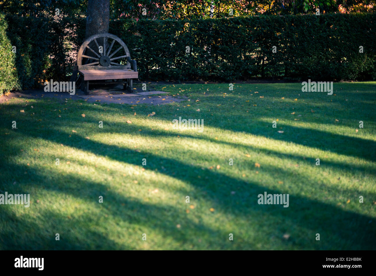 Bench in park of the Dandenong Ranges, with large shadows, at golden hour. - Stock Image