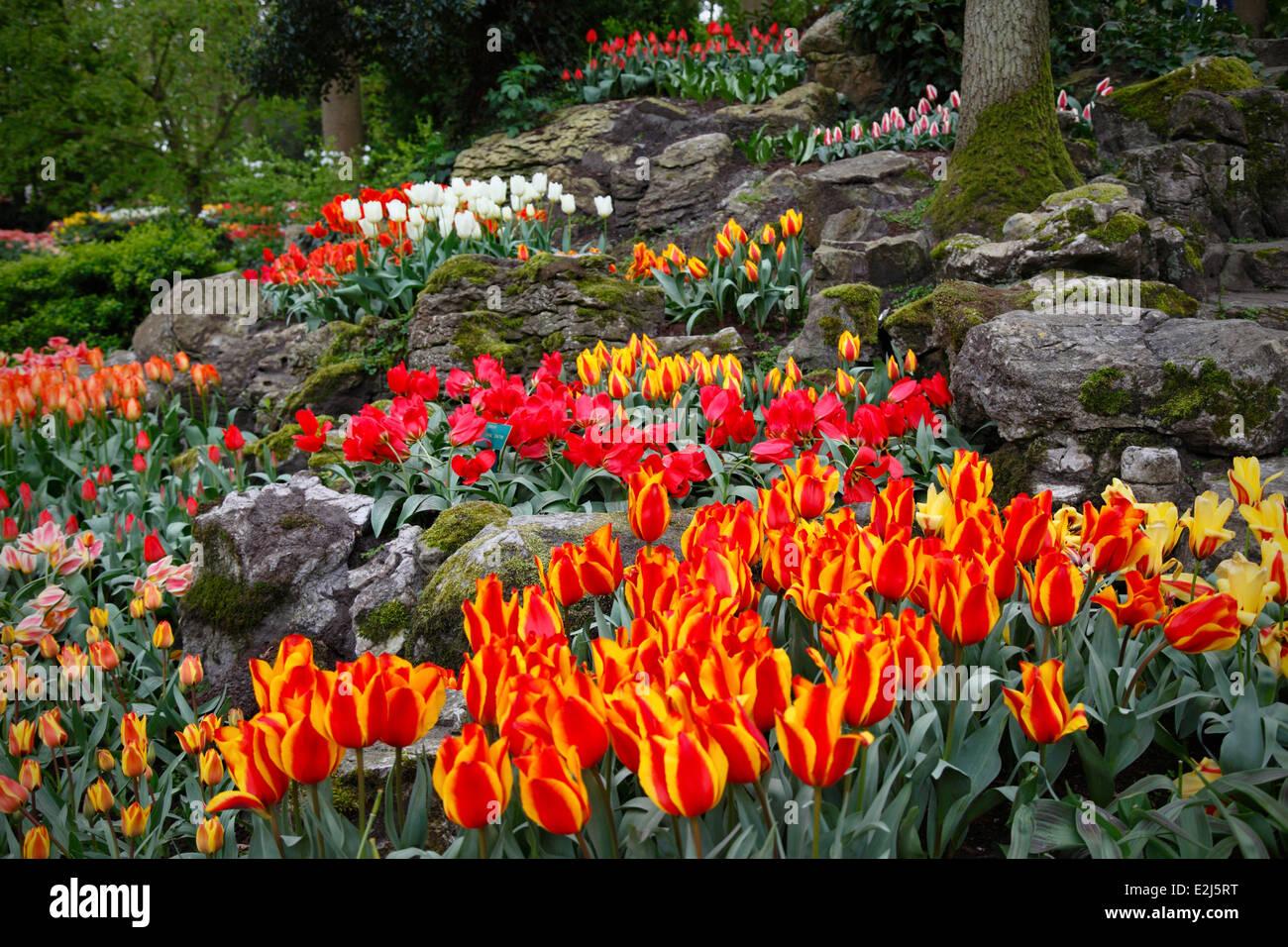 Tulips at Keukenhof Gardens near Lisse in the Netherlands - Stock Image