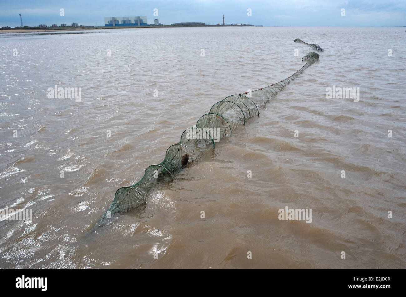 Traditional Fishing for soles and eels using double ended Fyke nets on the Humber Estuary mudflats - Stock Image
