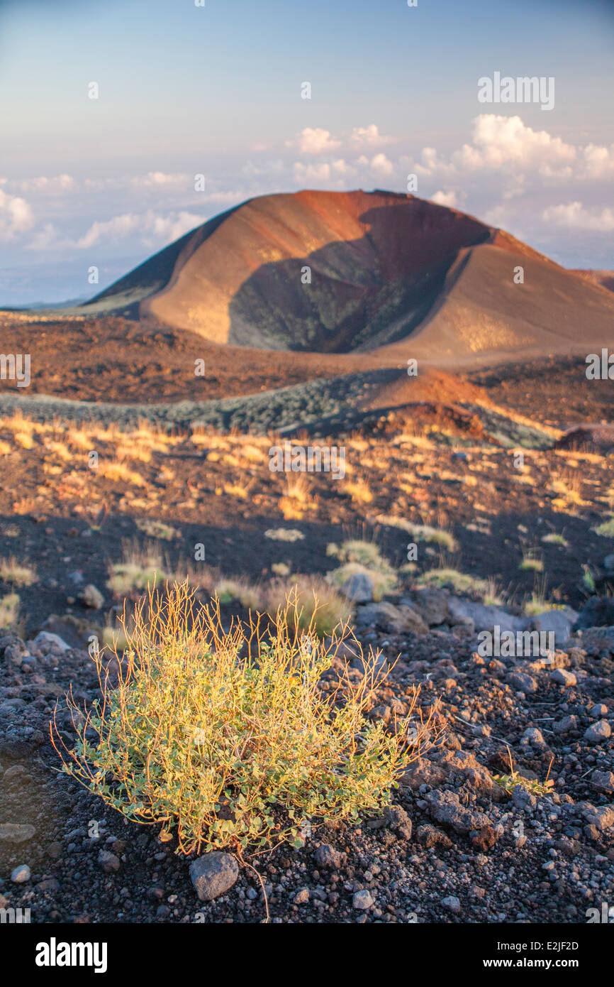 Mount Etna Sicily side vent and wild thyme - Stock Image