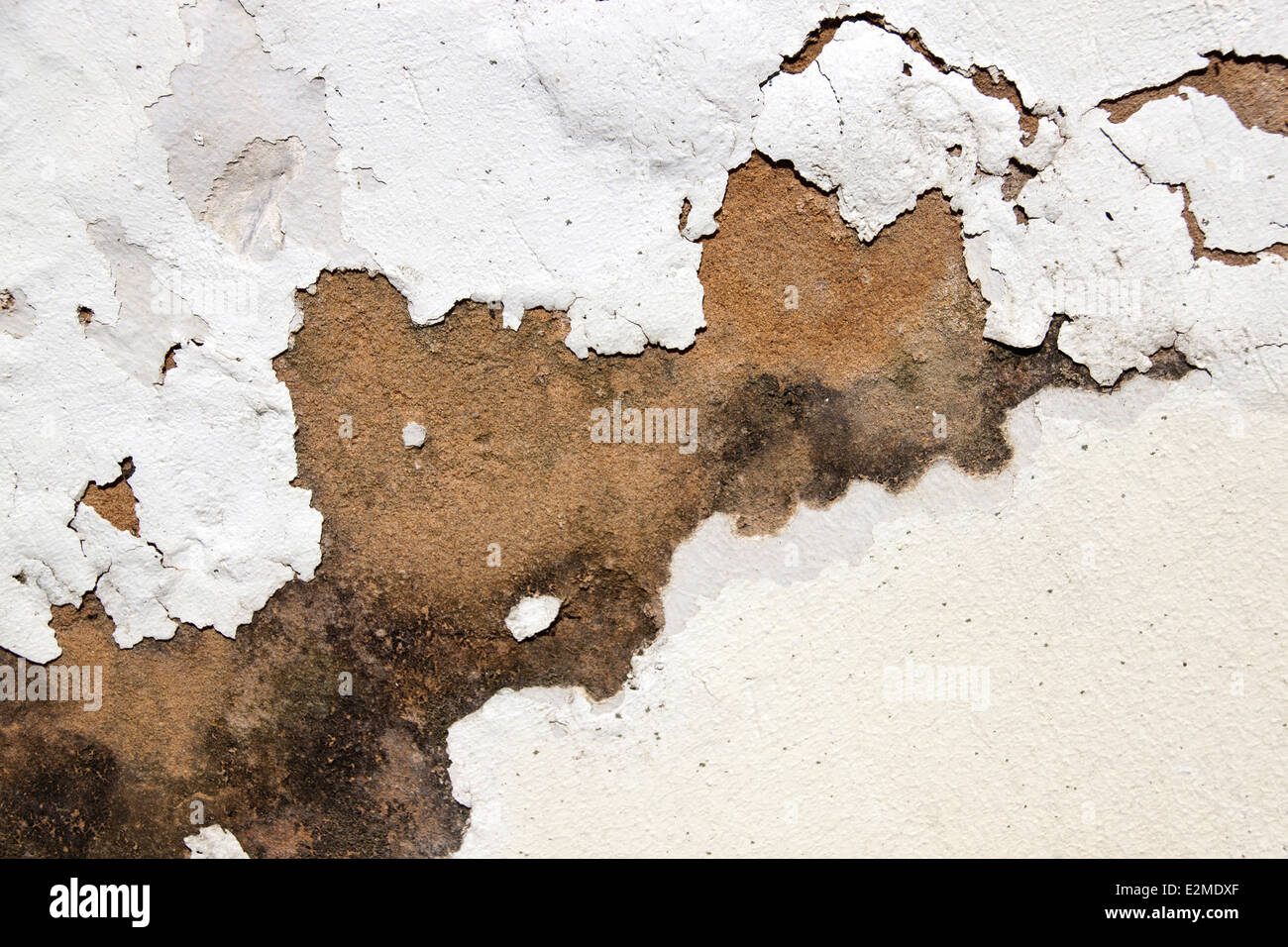 mold on plaster and peeling paint indicating rising damp - Stock Image