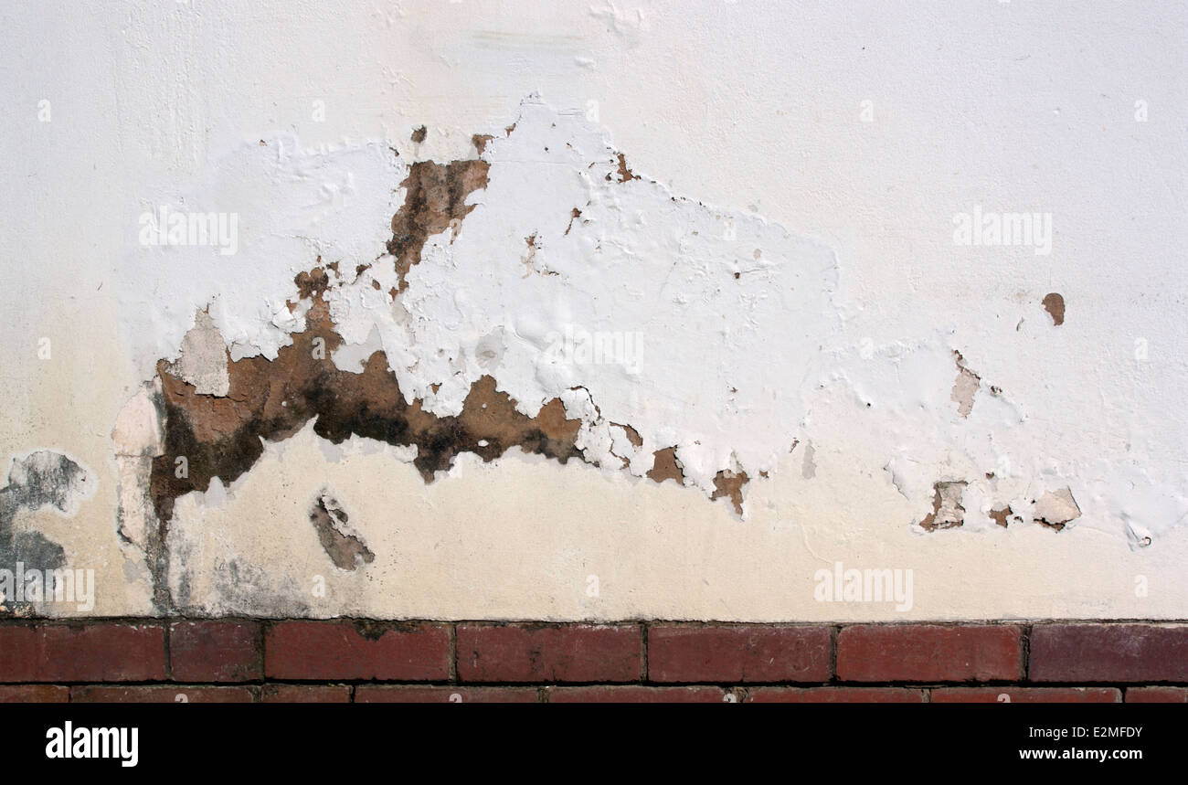flaking paint on exterior wall indicating rising damp - Stock Image