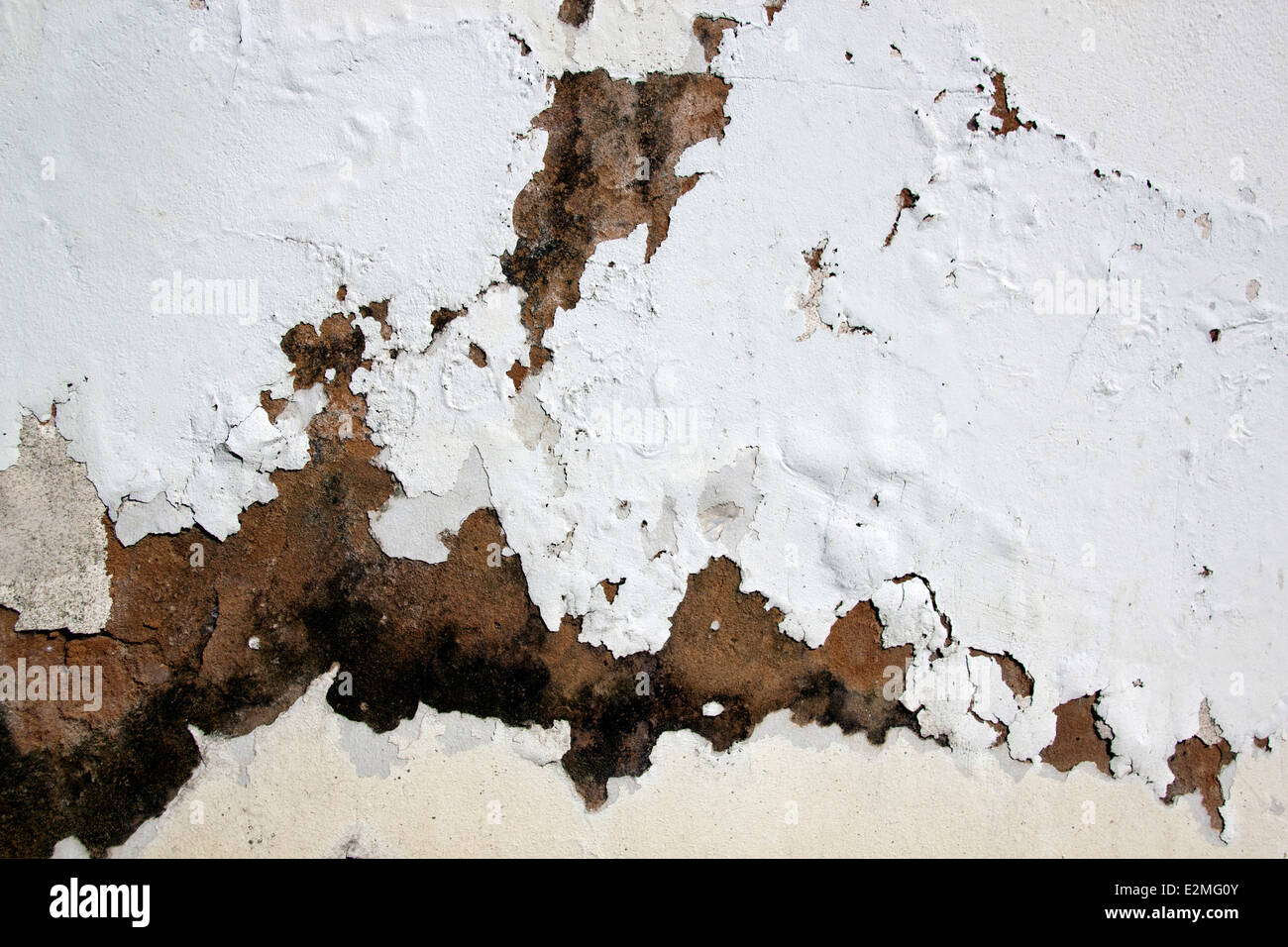 fungus and flaking paid due to rising damp - Stock Image