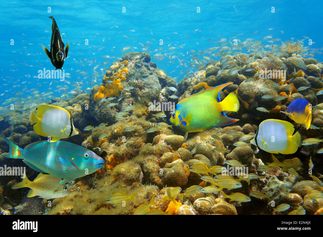 Thriving underwater life in a coral reef with colorful tropical fish - Stock Image