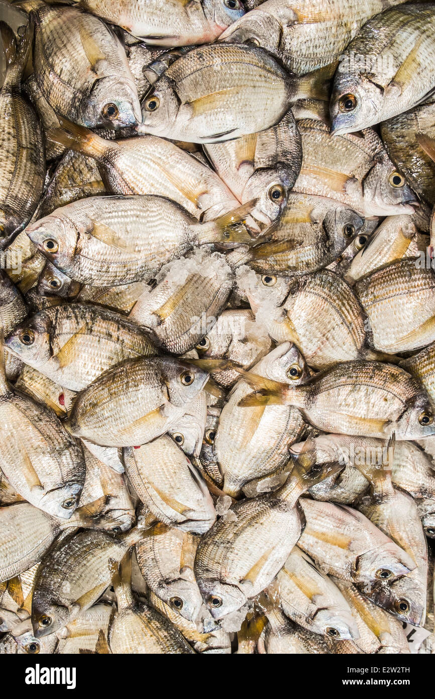 gilt-head breams at a fish stall at the covered market of loulé, algarve, portugal - Stock Image