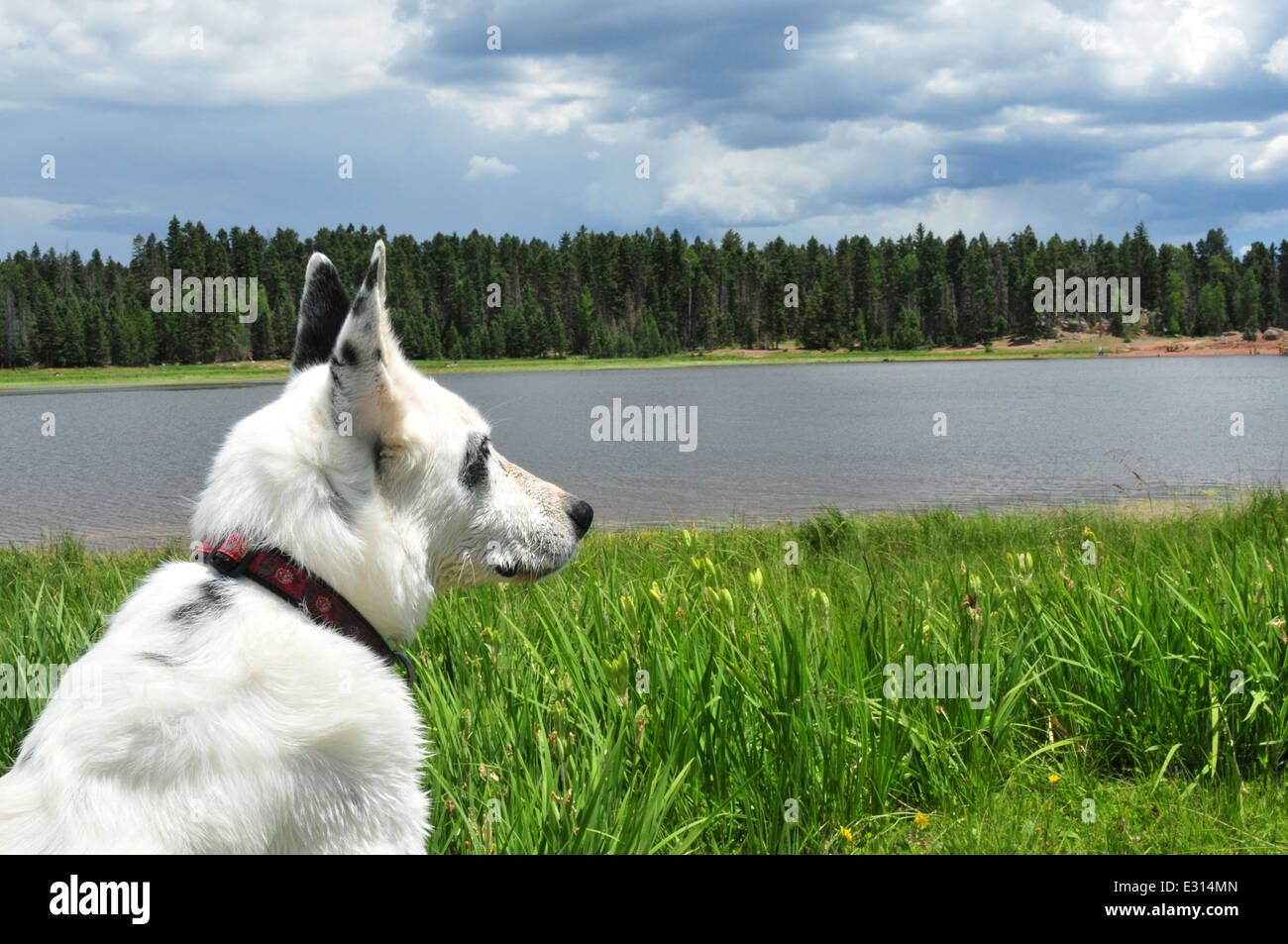 Dog sitting beside a lake in New Mexico - Stock Image