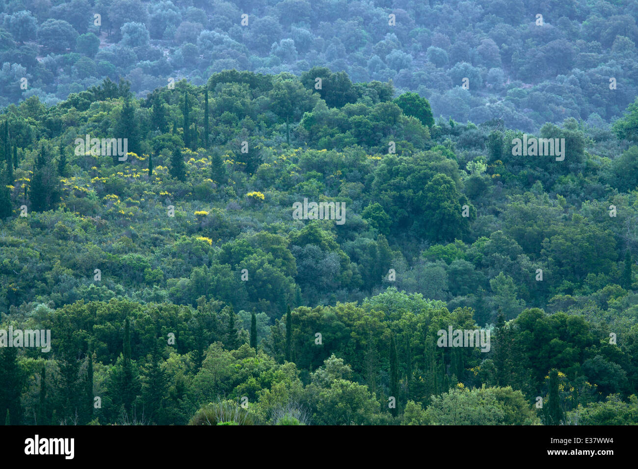 Trees and wildflowers cover the hills and mountain near Tzanata Stock Photo