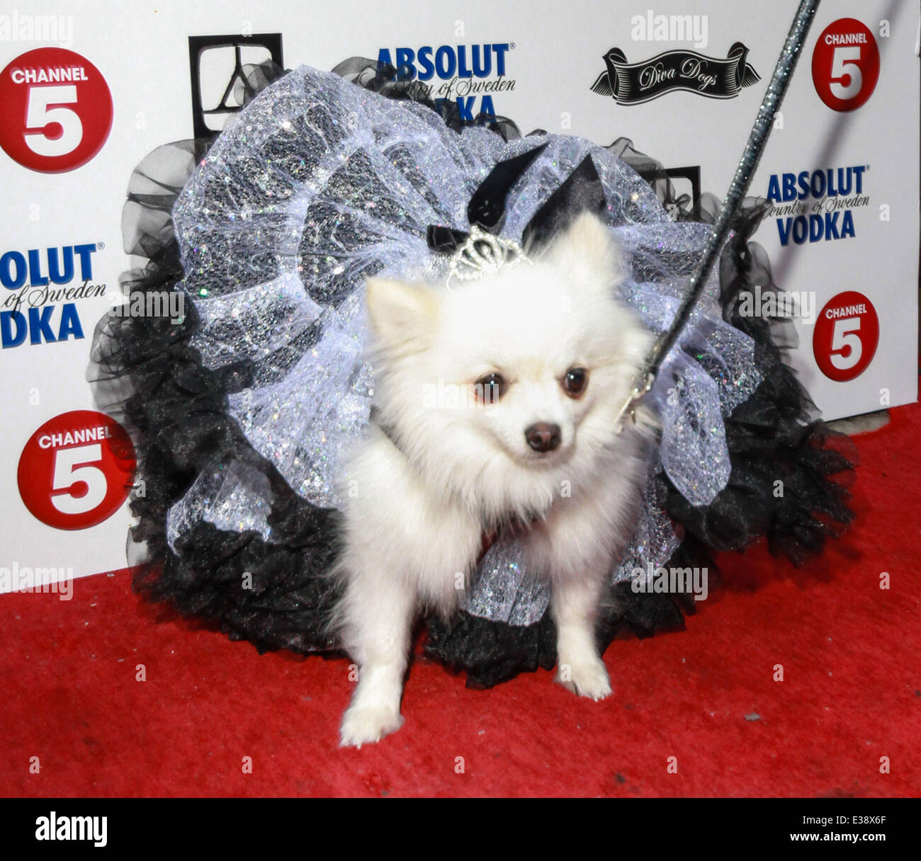 Worlds Most Pampered Pets Party At Dstrkt Where London United