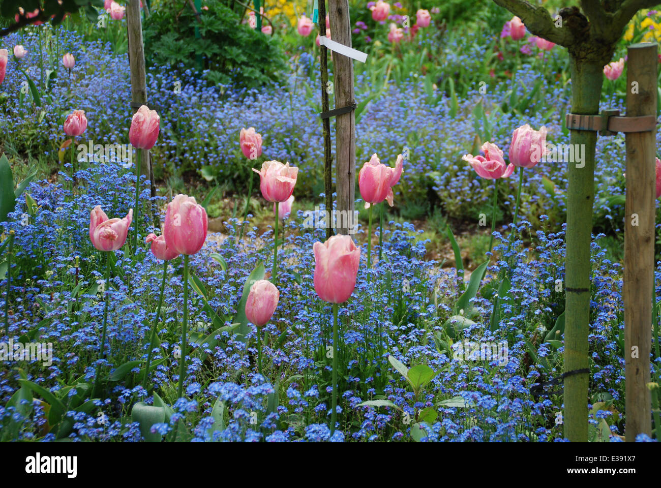 Flowers In The Giverny Gardens.   Stock Image