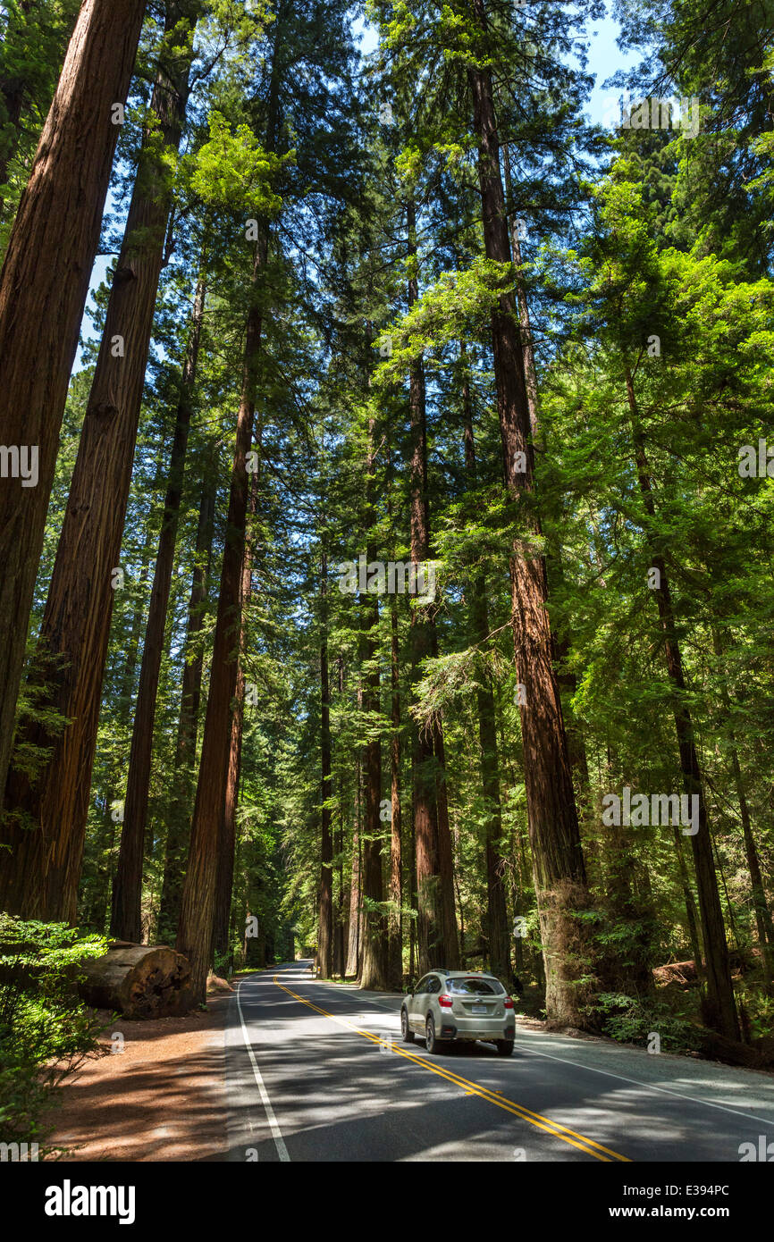 Car driving through the redwoods on Avenue of the Giants, Humboldt Redwoods State Park, Northern California, USA - Stock Image