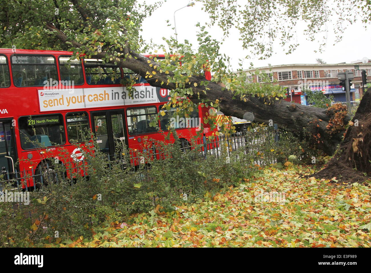 A one hundred year old tree crashes on top of a 221 bus on Wood ...