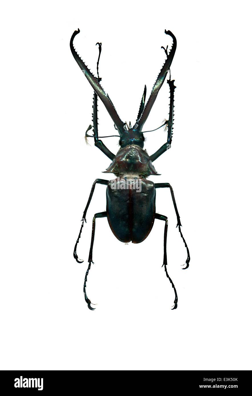 Specimen Beetles Biology Stock Photos & Specimen Beetles Biology ...