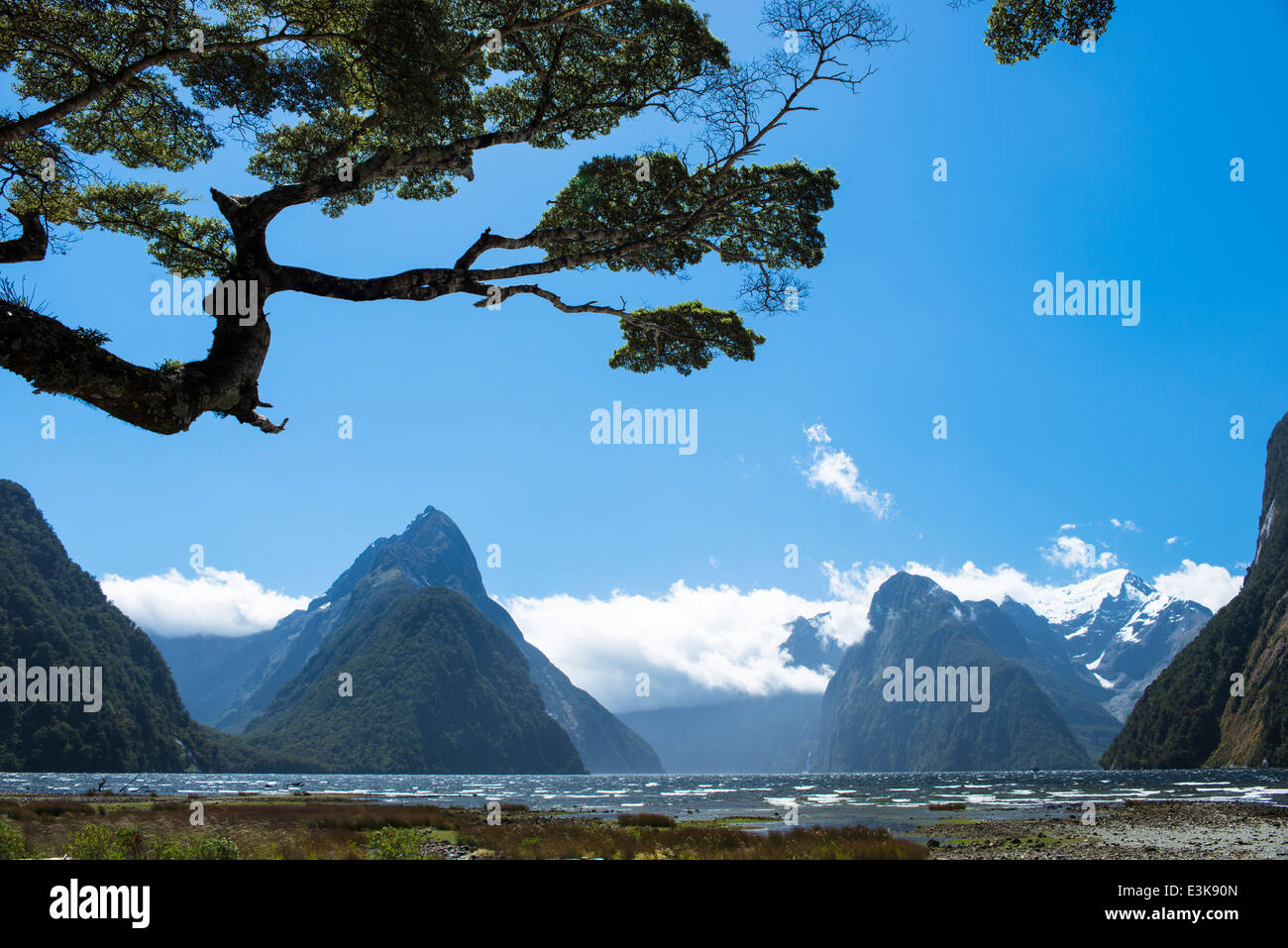 Milford Sound a windy sunny day - Stock Image