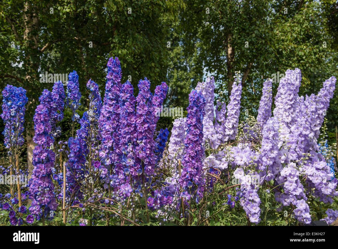 Light Dark Purple Flowers Stock Photos Light Dark Purple Flowers