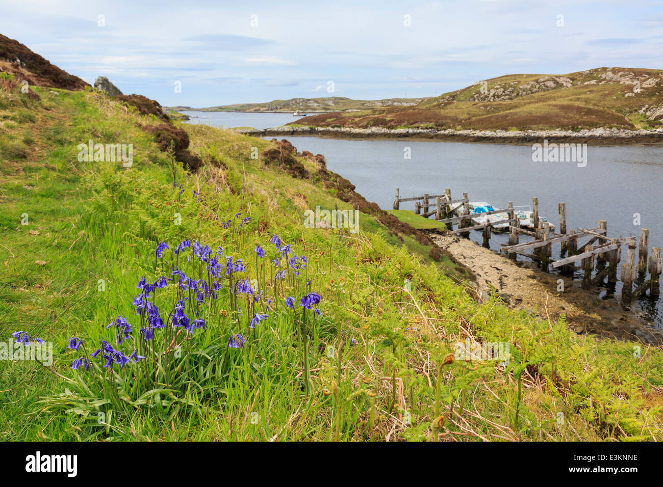 Coastal scene with Bluebells growing by Loch Sgioport, South Uist, Outer Hebrides, Western Isles, Scotland, UK, Stock Photo