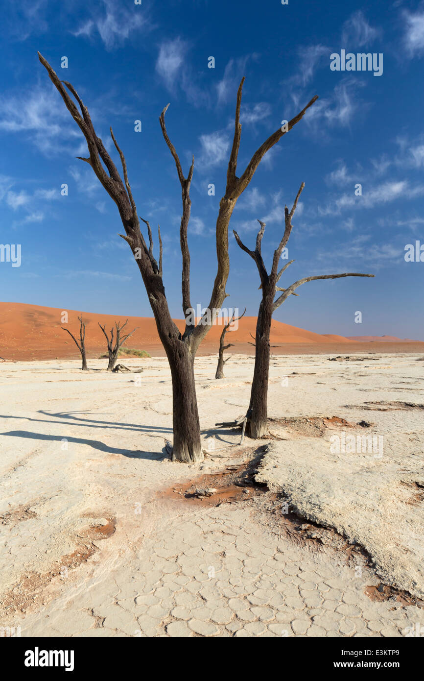 View of dead acacia trees and red dunes of Namib desert, Deadvlei (Sossusvlei) of Namibia - Stock Image