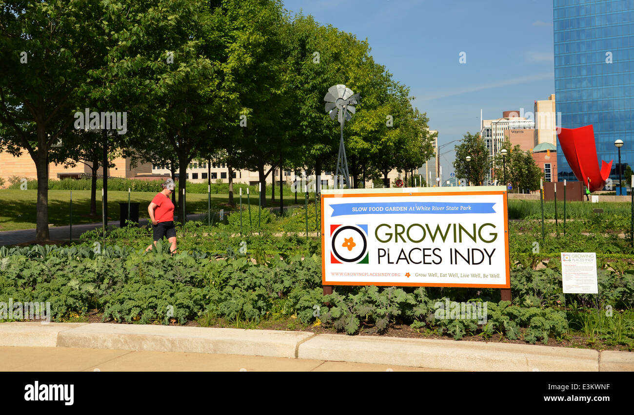 INDIANAPOLIS - JUNE 15: Growing Places Indy maintains four urban micro-farms, such as this Slow Food Garden in downtown Stock Photo