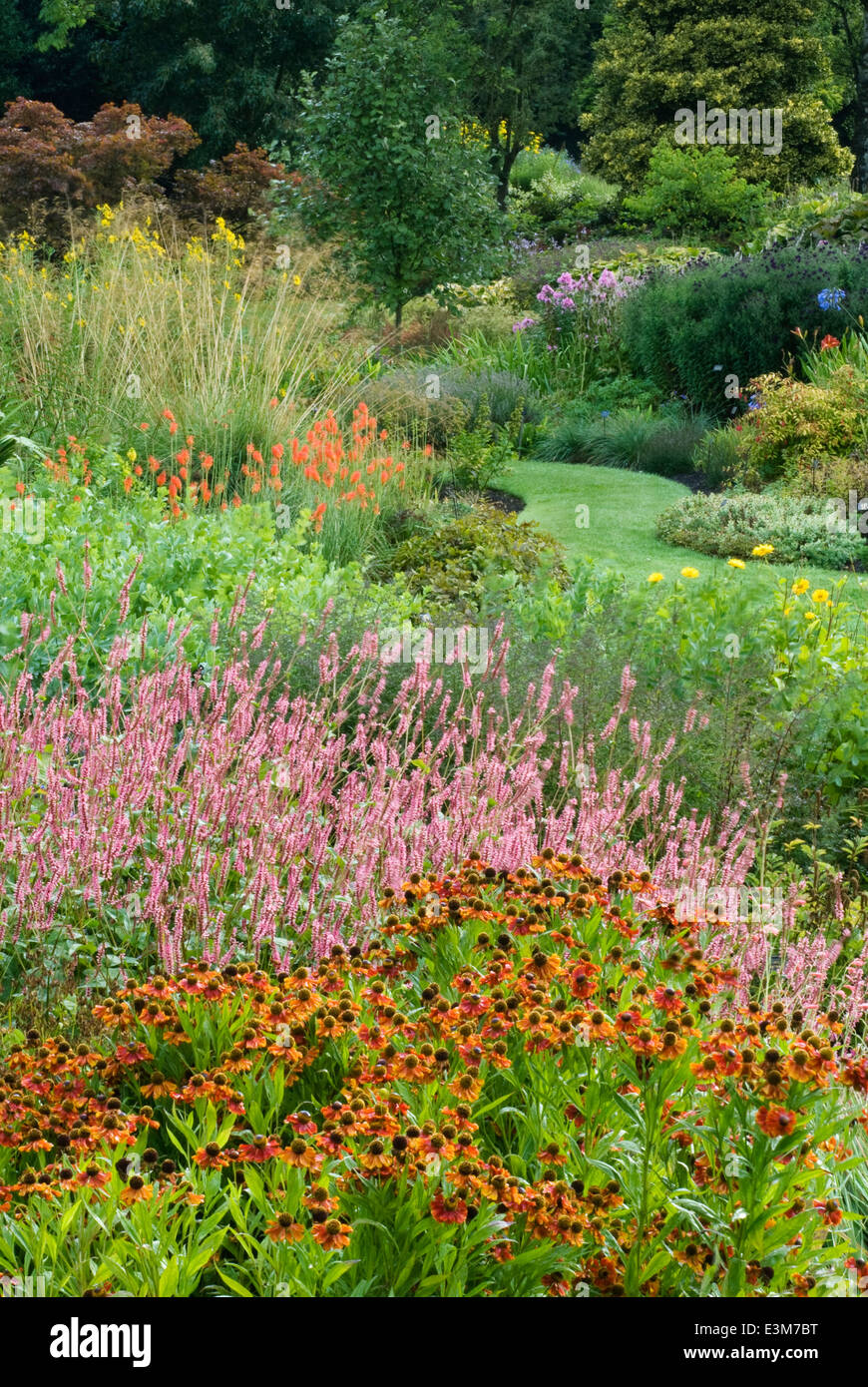 Perennials and Grass, August. Portrait of summer borders and pathway. - Stock Image