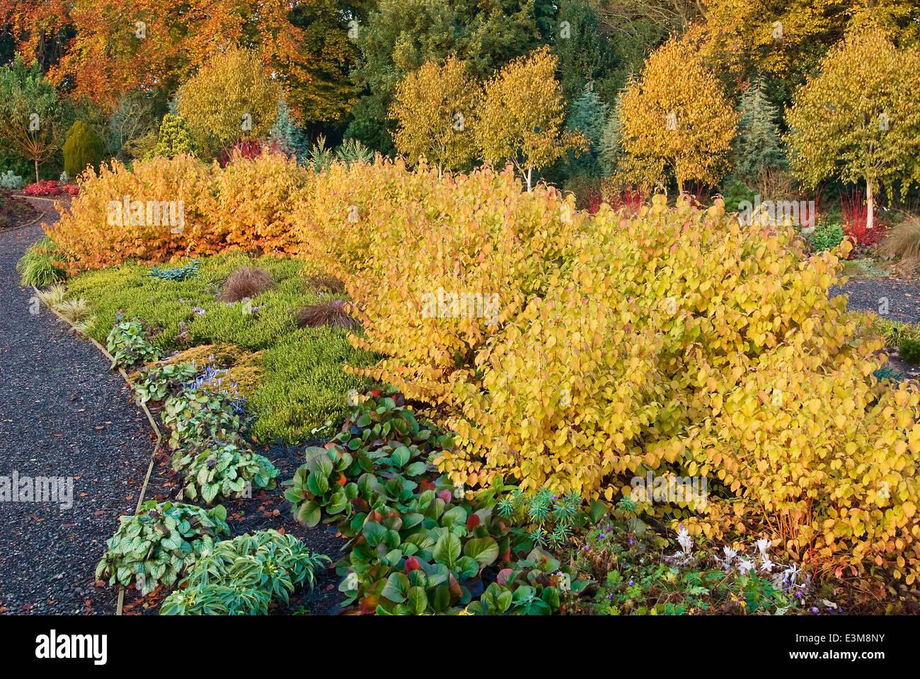 The Winter Garden in autumn. Bressingham Gardens, Norfolk, UK, Design: Adrian Bloom. Stock Photo
