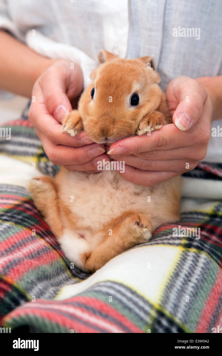 Tokyo, Japan - A member of staff holds a rabbit at the Ms