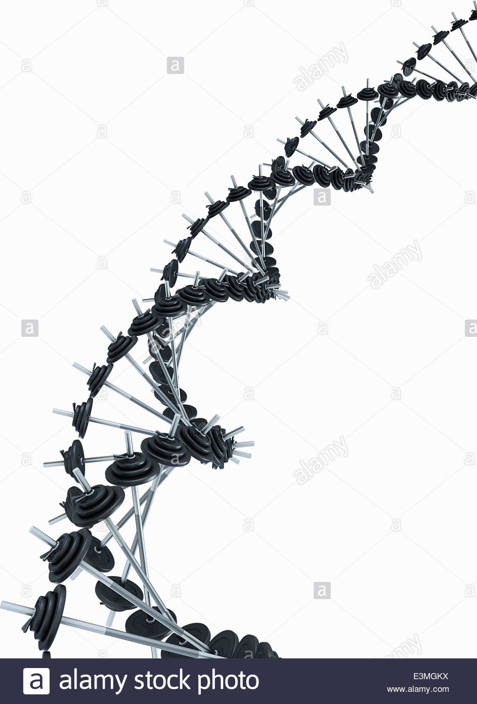Barbells forming double helix - Stock Image