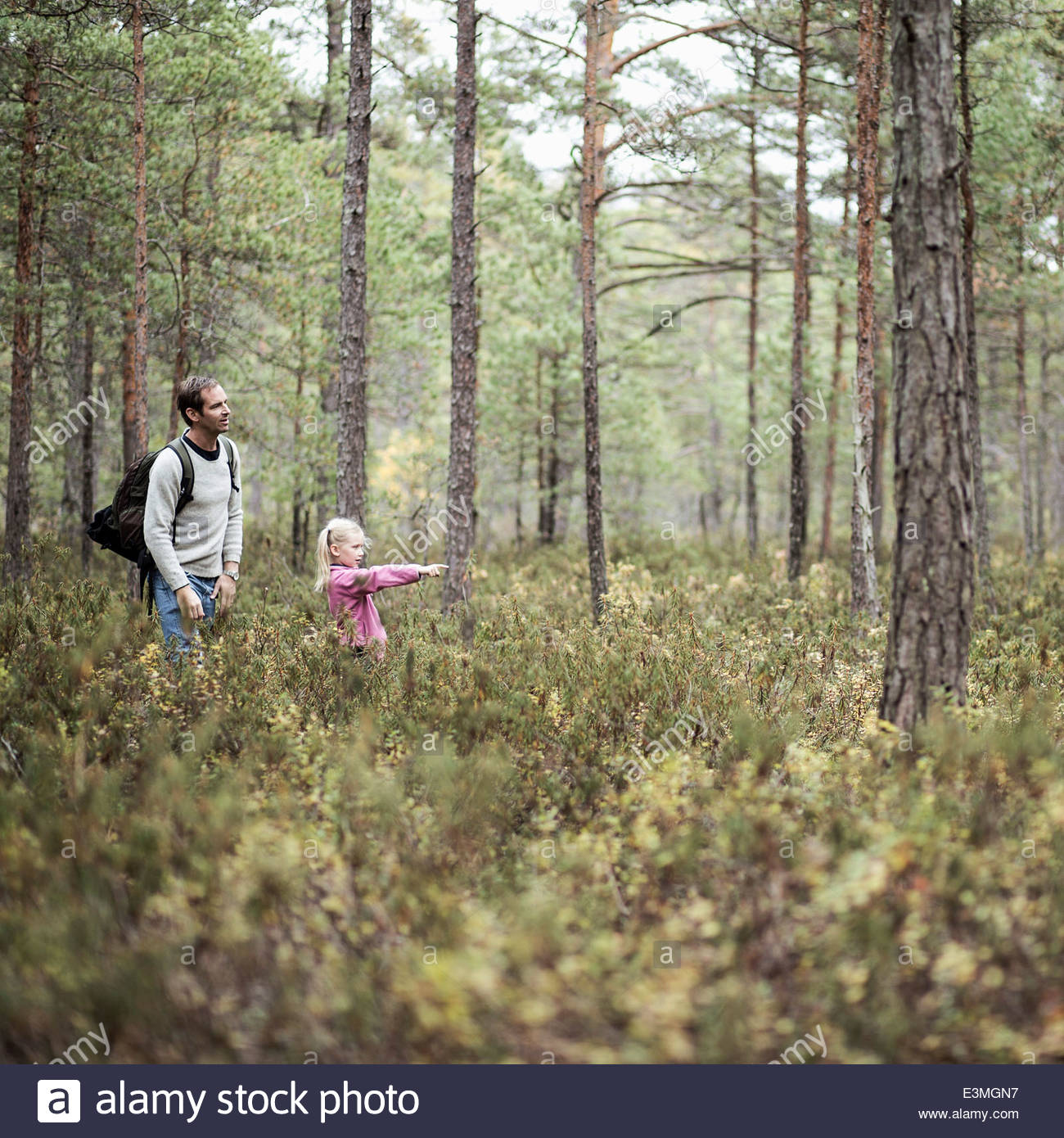 Girl showing something to father in forest - Stock Image