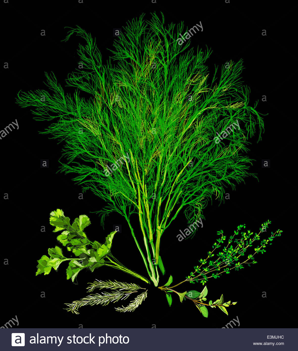 Variety of fresh herbs - Stock Image