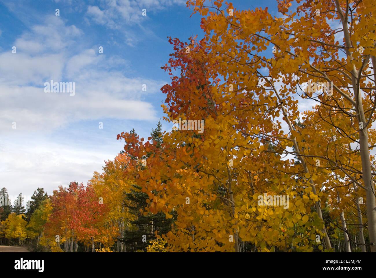 North Kaibab Fall Colors - Stock Image