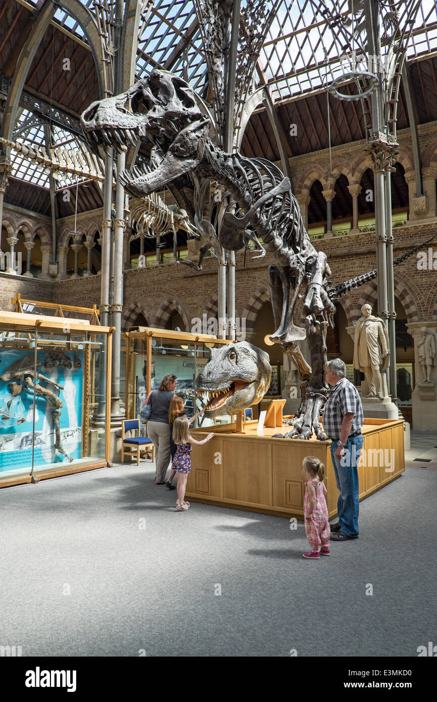 Visitors with children viewing an exhibited Tyrannosaurus rex fossil at the Natural History Museum in Oxford, Oxfordshire, - Stock Image