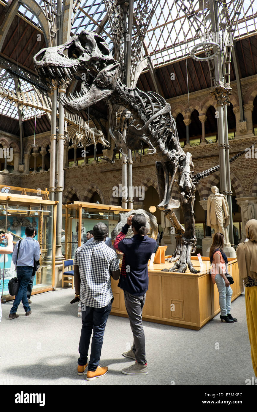 Visitors viewing & photographing an exhibited Tyrannosaurus rex fossil at the Natural History Museum in Oxford, - Stock Image