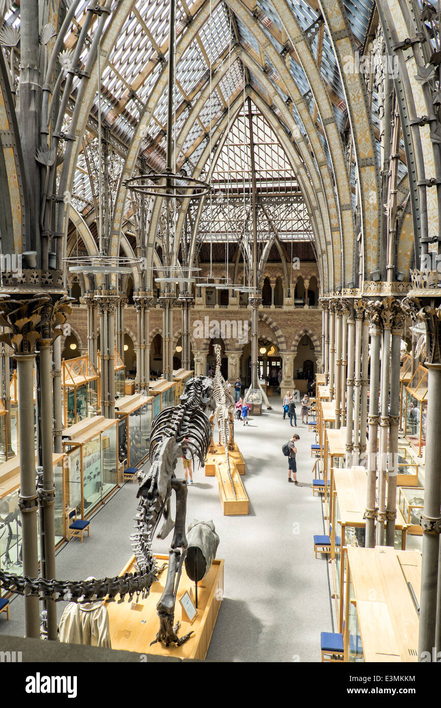 The interior of the natural history museum in Oxford, Oxfordshire, UK showing visitors, exhibits & the Victorian - Stock Image