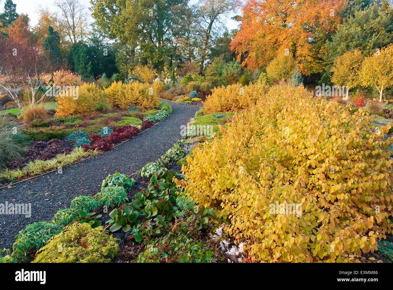 The Winter Garden  in Autumn. Bressingham Gardens, Norfolk, UK, Design: Adrian Bloom. - Stock Image