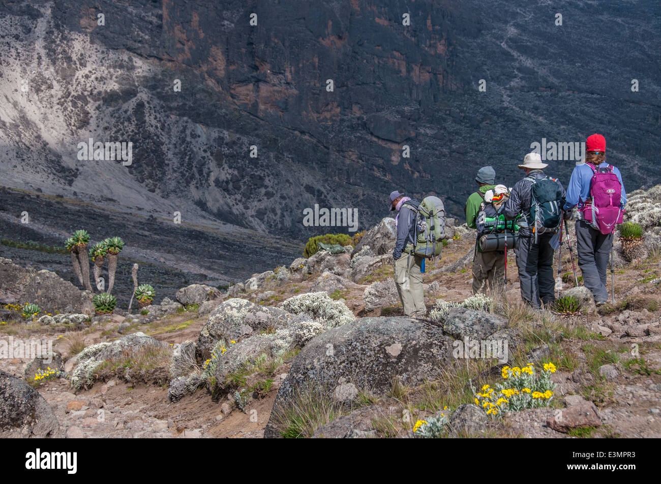 Group moving down to the campsite at Barranco after acclimatising at Lava Tower on Kilimanjaro - Stock Image