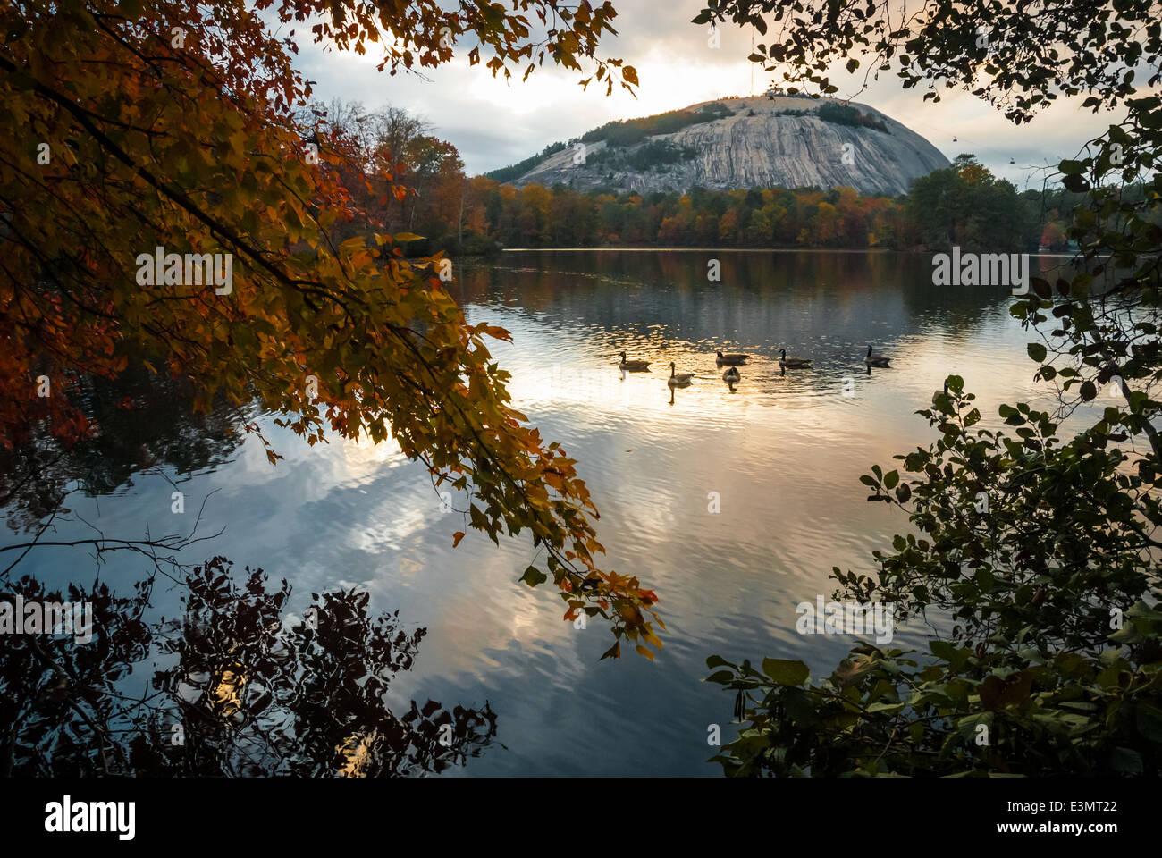 Ducks Glide Across A Still Lake At Stone Mountain Park Near Atlanta