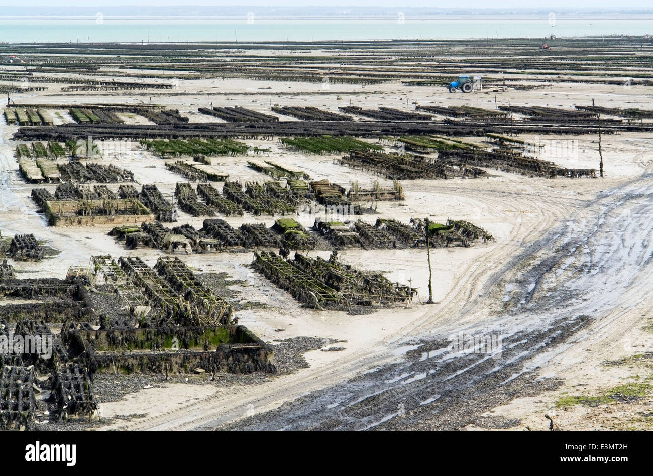 lots of oyster beds at a town in Brittany named Cancale Stock Photo
