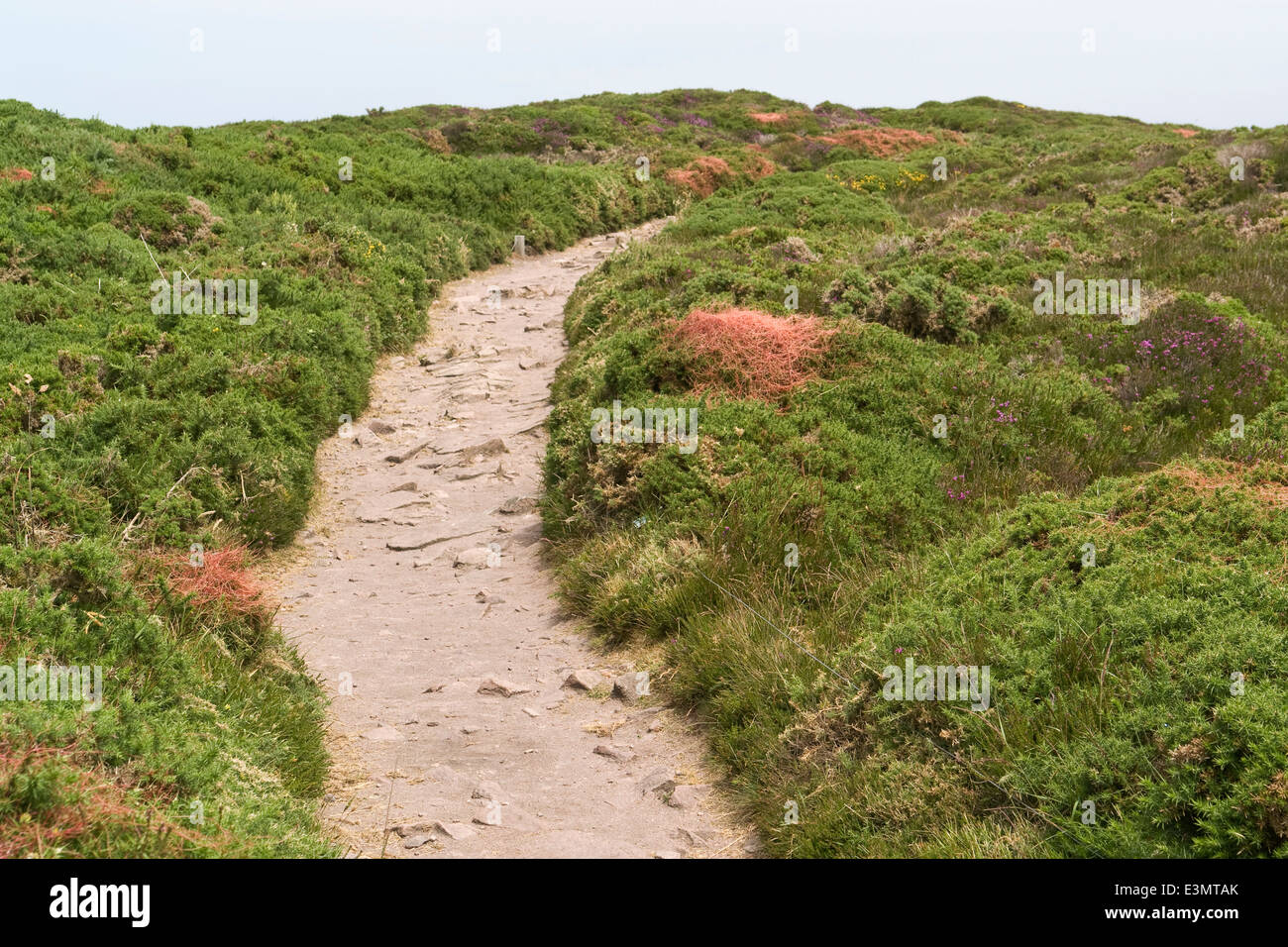 heathland with footpath at Cap Frehel in Brittany, France Stock Photo