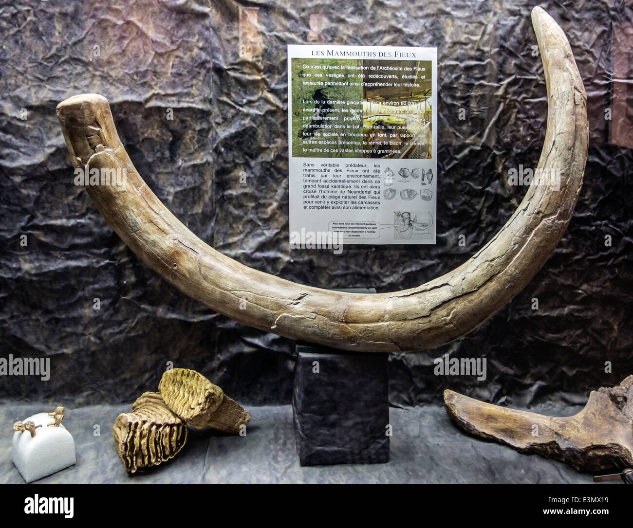 Mammoth tusks: mining, products 46